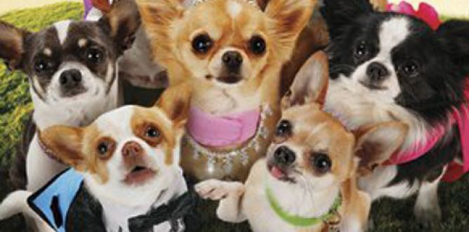 Picture from Beverly Hills Chihuahua 3: Viva la Fiesta!