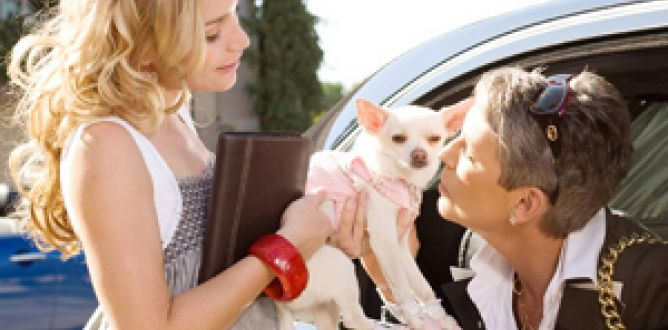 Picture from Beverly Hills Chihuahua