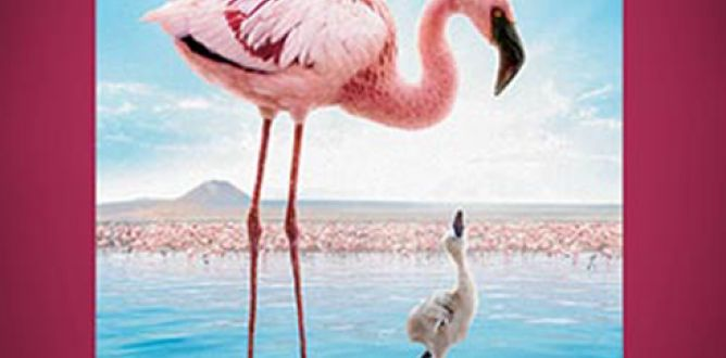 Picture from Crimson Wing: Mystery of the Flamingos