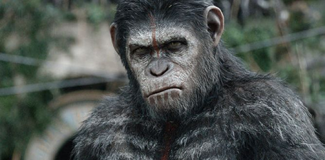 Picture from Dawn of the Planet of the Apes