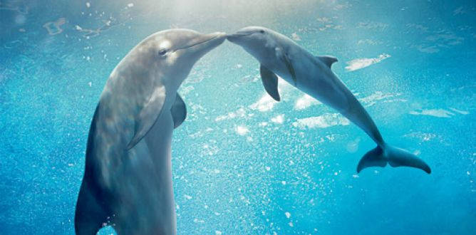 Picture from Dolphin Tale 2
