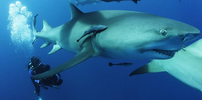 Sharkwater Extinction parents guide