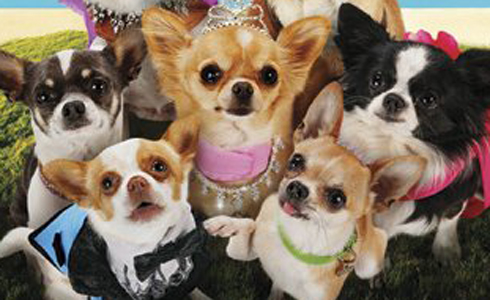 Still shot from the movie: Beverly Hills Chihuahua 3: Viva la Fiesta!.