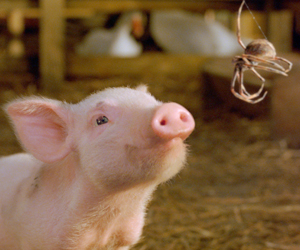 Still shot from the movie: Charlotte's Web.