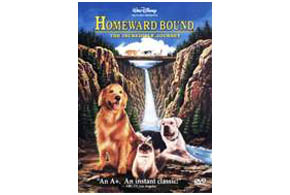 Still shot from the movie: Homeward Bound: The Incredible Journey.